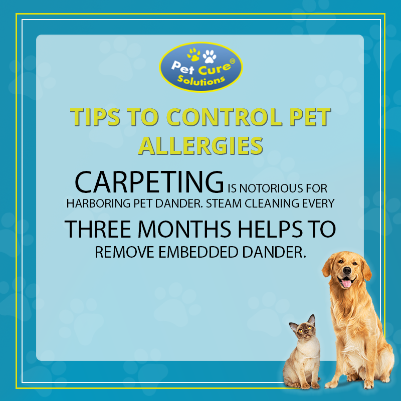 Tips to control pet allergies Carpeting is notorious for