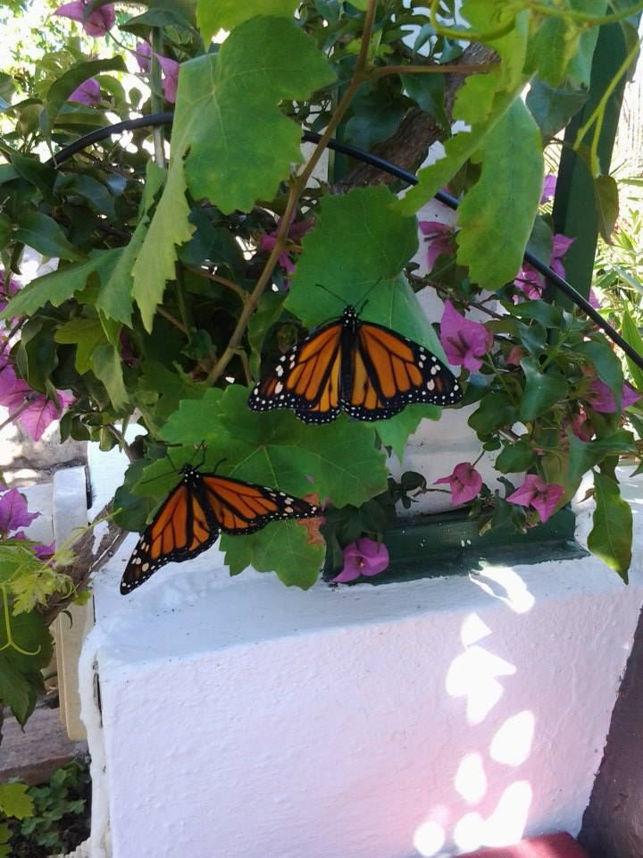 Why you shouldn't include a butterfly release in your