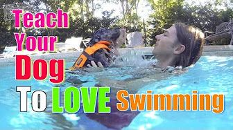 """How to Teach ANY DOG """"Drop it"""" / """"Let Go"""" in Minutes! - YouTube"""