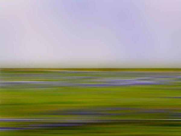 Wildflower: Photos by Danae Falliers