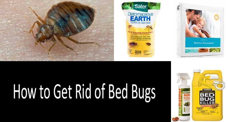 How To Get Rid Of Bed Bugs With Bombs And Foggers Does It Really