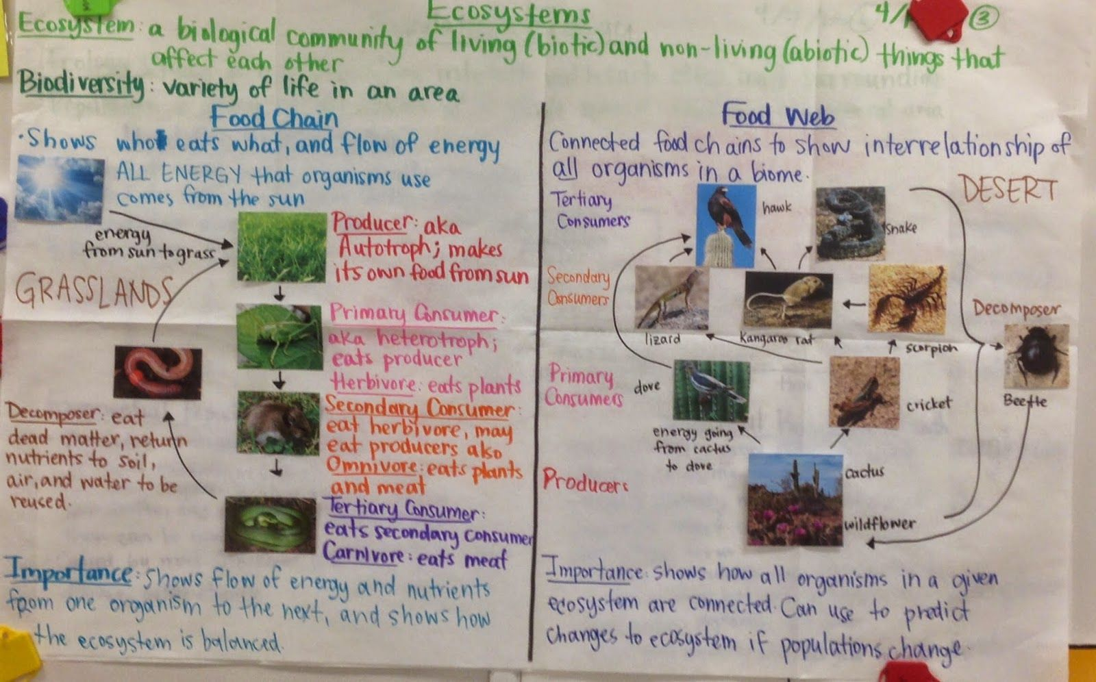 10th Grade Biology Notes