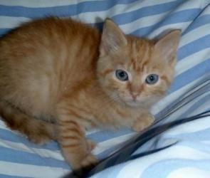 air jordan shoes light green and orange /white tabby kittens per