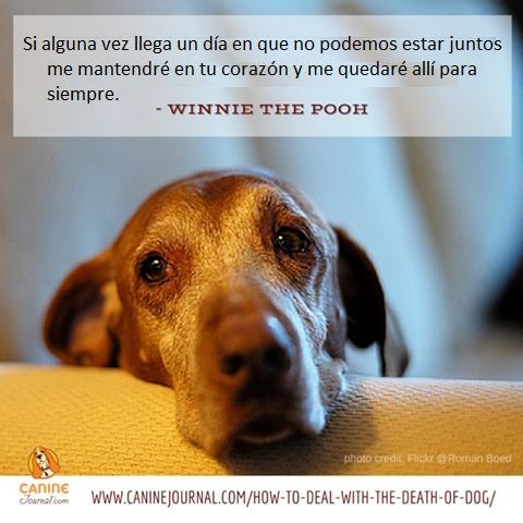Dog Death Quotes Pinalza La Voz Ecología On Frases De Alve  Pinterest  Animal