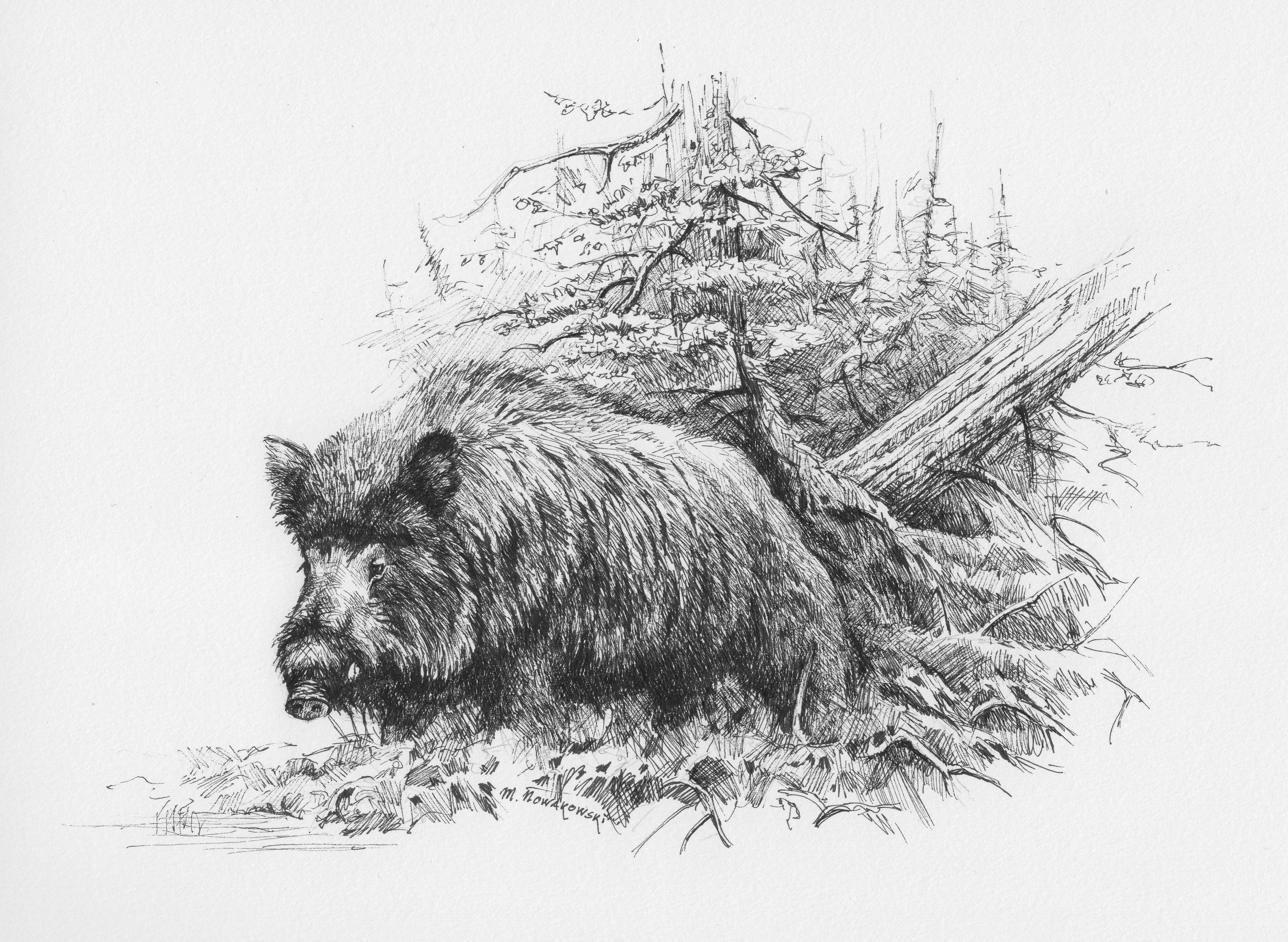 ''wildboar'' ink on paper 17 x 24 cm  pinturas de