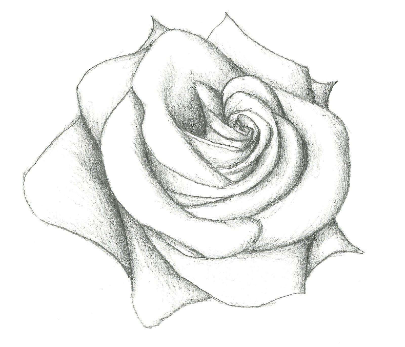 Easy Pencil Drawing Of Rose 12 Model Easy Pencil Drawings