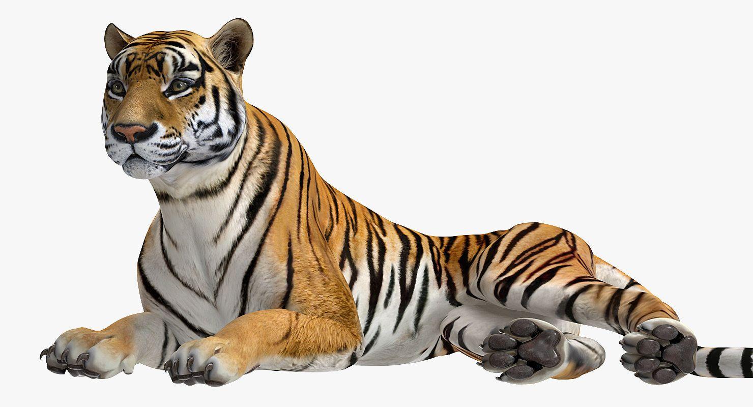 3D model lying tiger 3d model, Model, Tiger