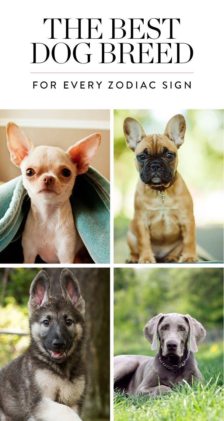 The Best Dog Breed For Every Zodiac Sign Dog Breeds Dog Zodiac Best Dog Breeds