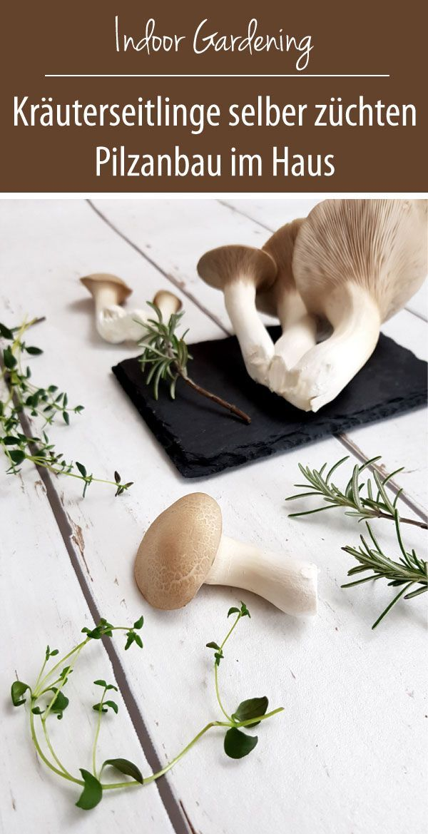 Grow herb mushrooms yourself Mushroom cultivation in the house  love of green  Grow herb mushrooms yourself  readymade culture in the house