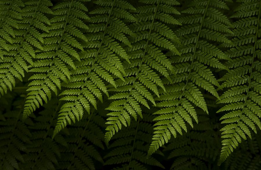 Where the Green Fern Grows by Kristina Wilson - Photo 110106153 - 500px