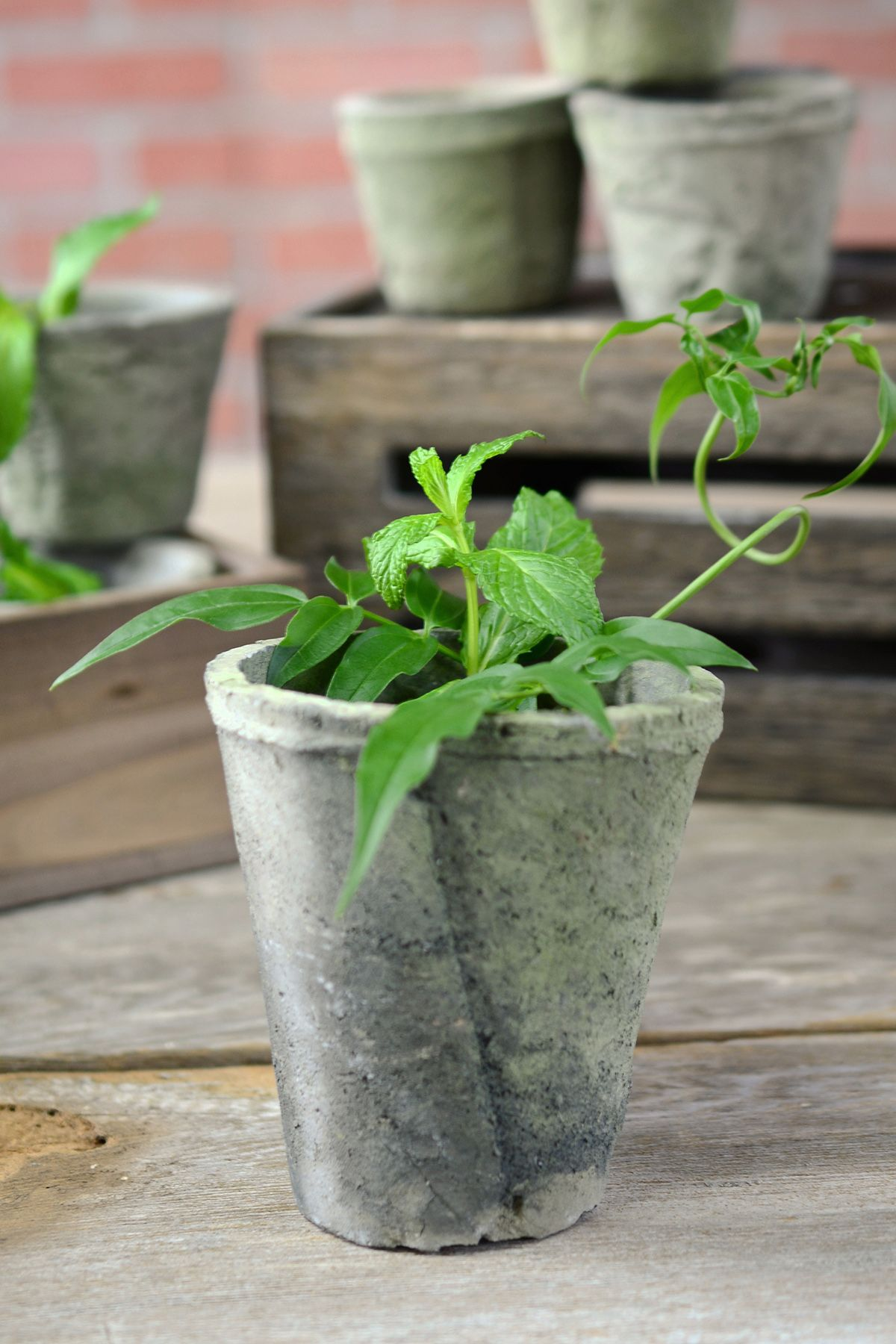 Rustic Cement Flower Pots 4 1 2 Inch Cement Flower Pots Flower Pots Flower Pot Design