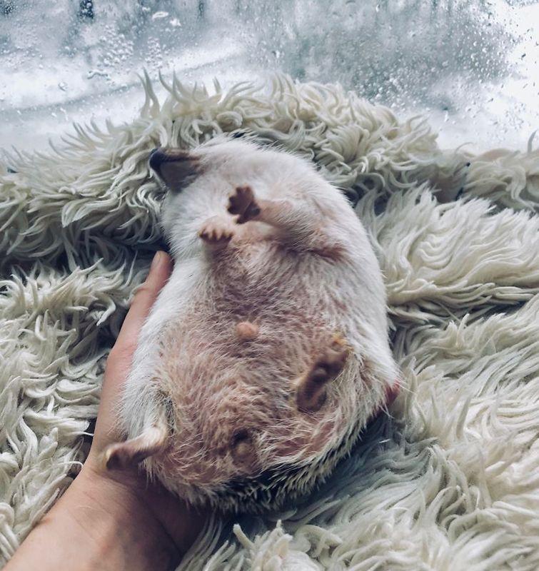 Instagram дня. Львівський їжак вимагає вашу усмішку. ФОТО