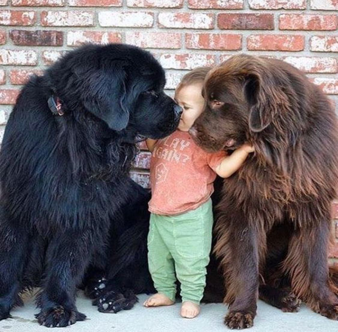 Pin by Gail Roest on precious moments Pinterest Dogs Pets and