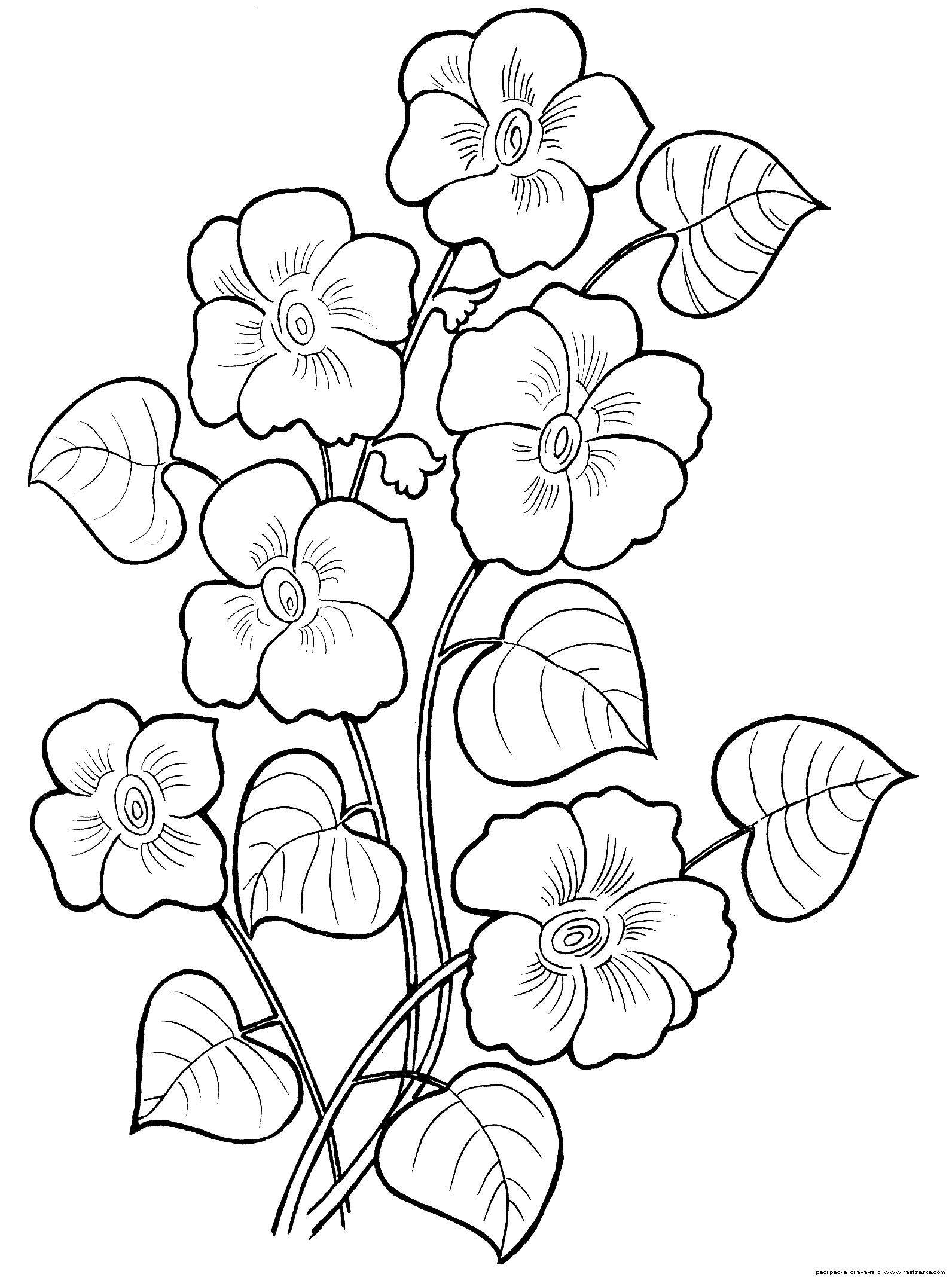 Картинки растений раскраски распечатать