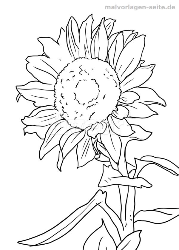 Malvorlage Sonnenblume Pflanzen Blumenzeichnung Malvorlagen Blumen Malvorlagen
