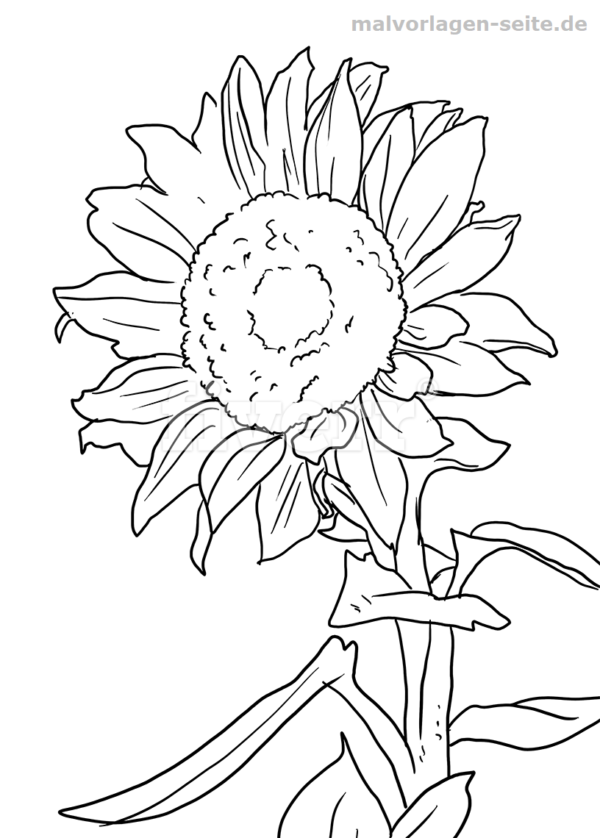 Malvorlage Sonnenblume | Pintura ante estres | Pinterest
