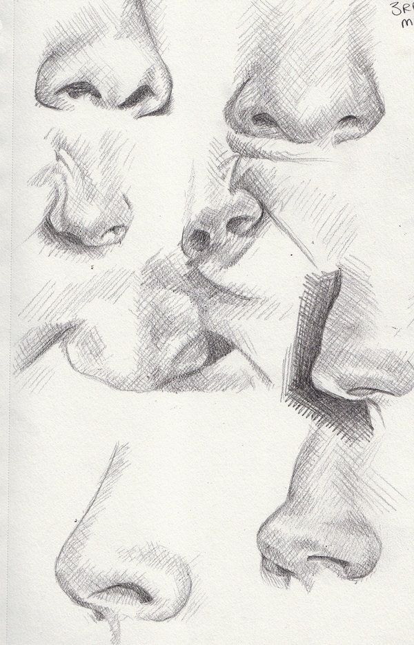 Noses.. The same but different...