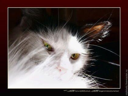 ...КОШКА ... ( авторская фотокартина для интерьера) - кошка,мир,авторская работа
