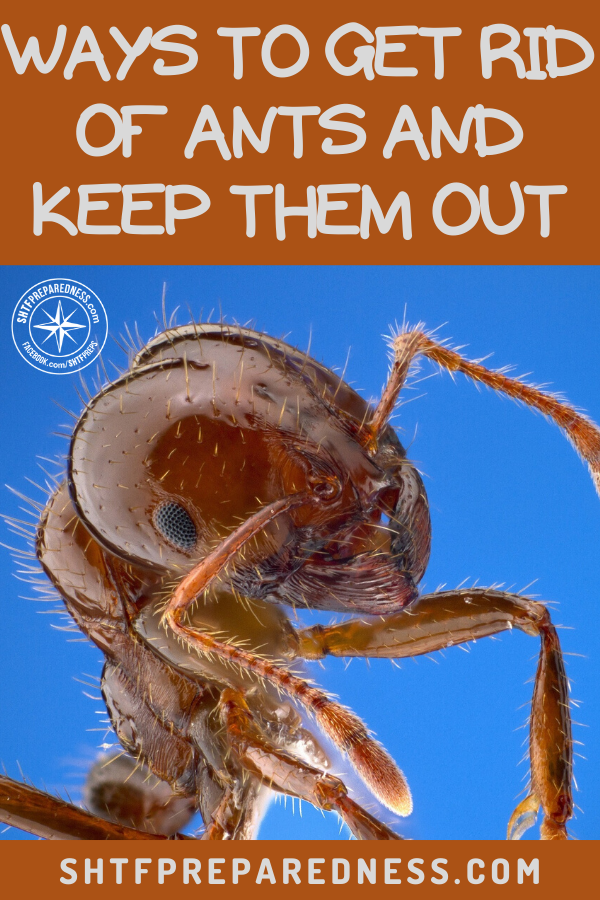 How To Get Rid Of Ants Once And For All Get Rid Of Ants Rid Of Ants Home Remedies For Ants