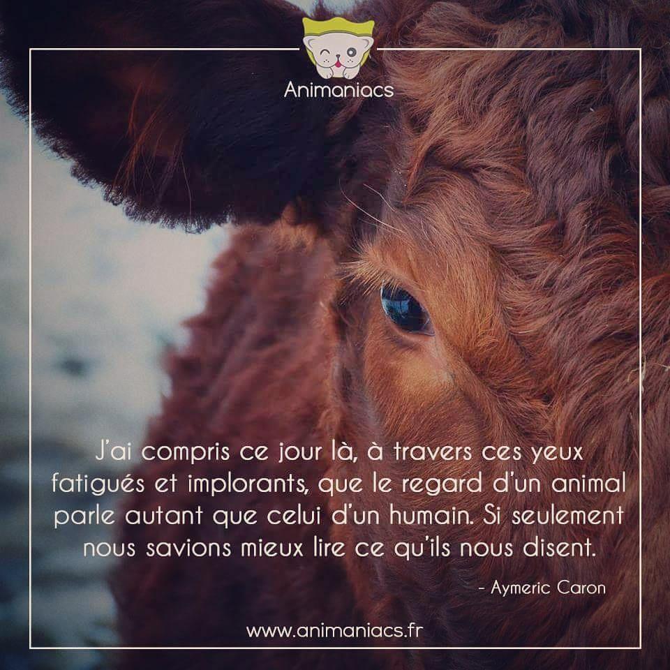 Citation Le Regard D Un Animal Parle Autant Que Celui D Un