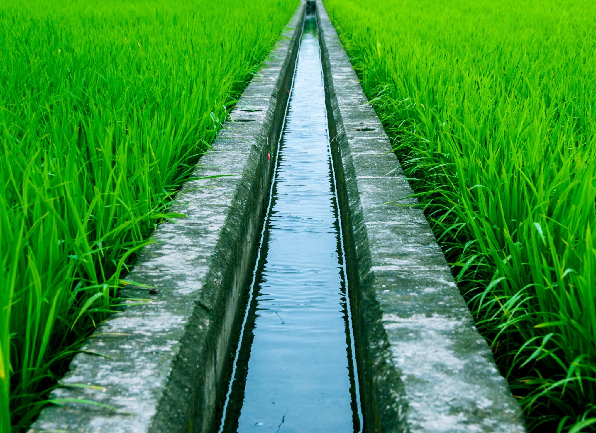 Irrigation systems are critically important to healthy