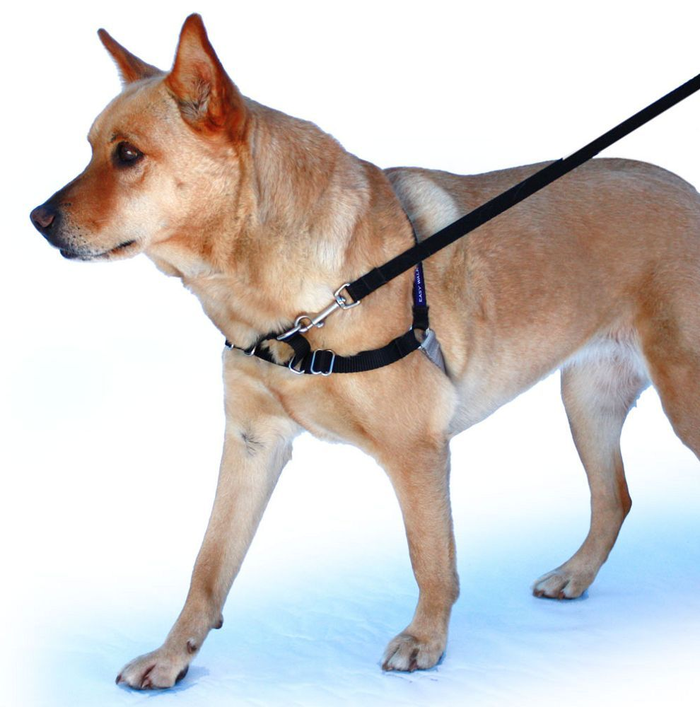 You Pooch Will Love The Comfort Of Our Gentle Leader Easy Walk