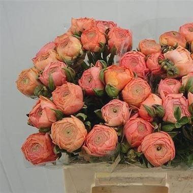 Ranunculus Aazur Salmon Flowers Uk Wedding Flowers Florist Supplies