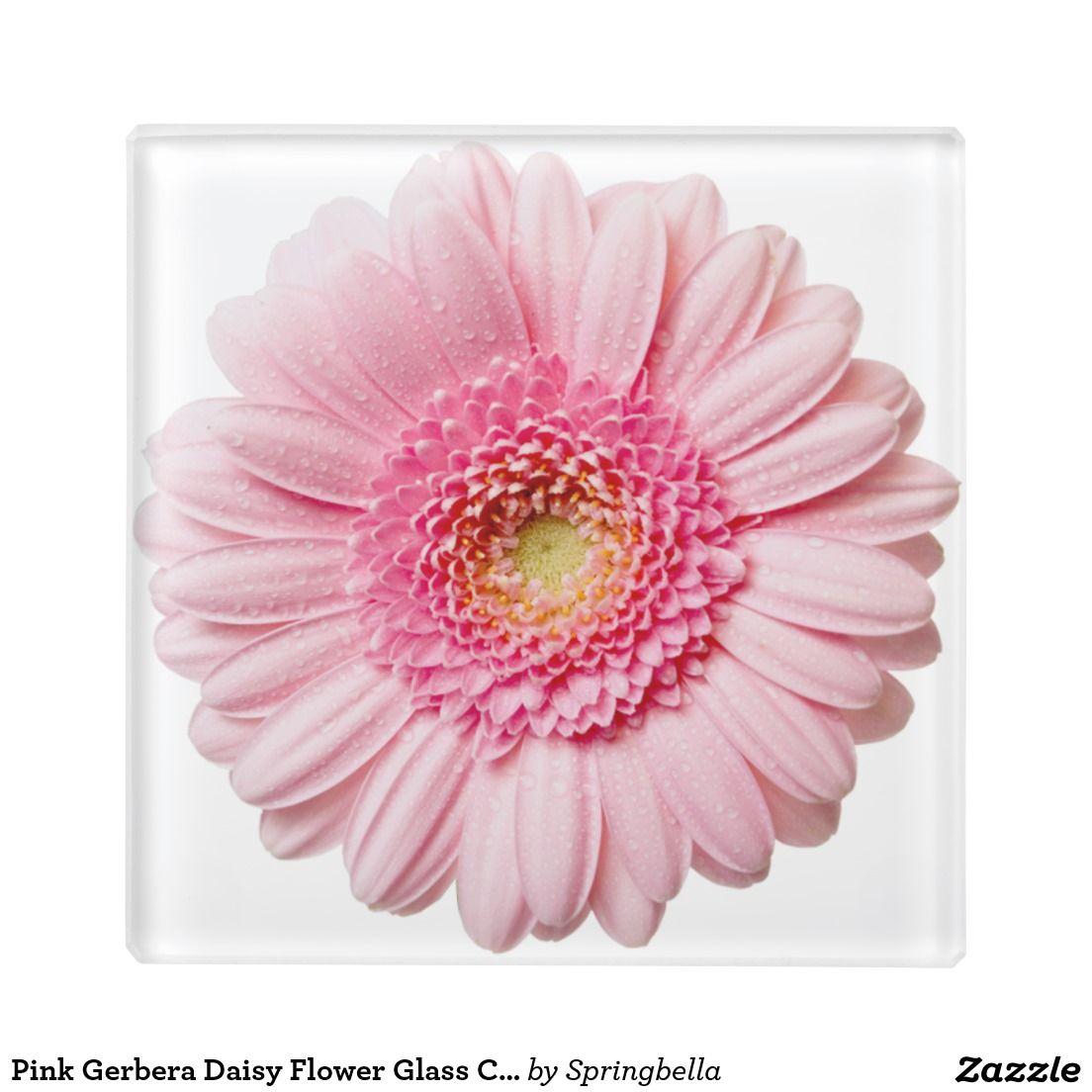 Pink Gerbera Daisy Flower Glass Coaster Zazzle Com Pink Gerbera Gerbera Daisy Gerbera