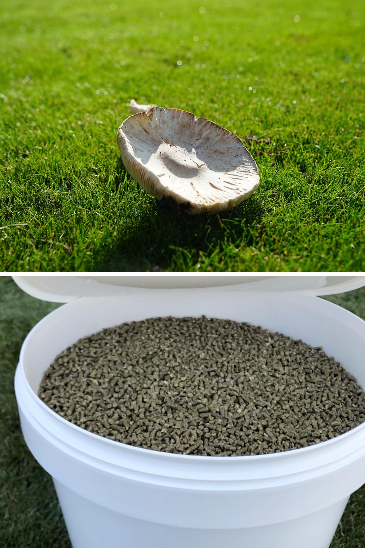 Pilze Auf Dem Rasen Was Nun Rasenbelufter Rasen Grun