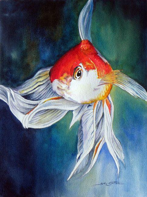 Sue Lynn Cotton Fantail Goldfish Watercolor Goldfish Art Fish