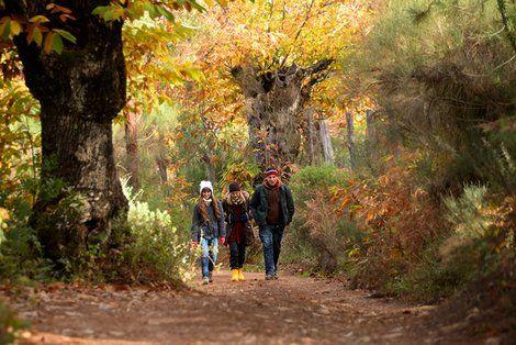 Rutas Y Senderos De La Sierra De Aracena Y Picos De Aroche Web Oficial De Turismo De Andalucía Rutas De Senderismo Senderismo Turismo