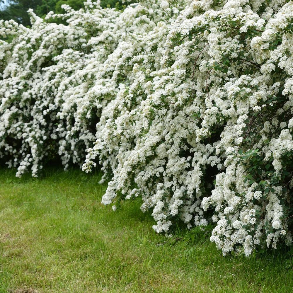 Épinglé sur Jardins blancs