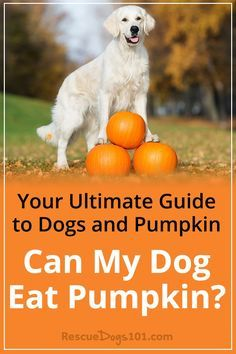 Your Ultimate Guide To Dogs And Pumpkin Can My Dog Eat Pumpkin