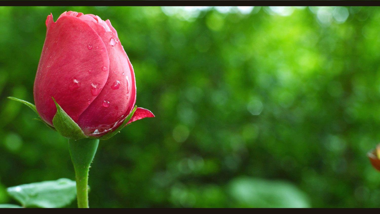 Gambar Pemandangan Bunga