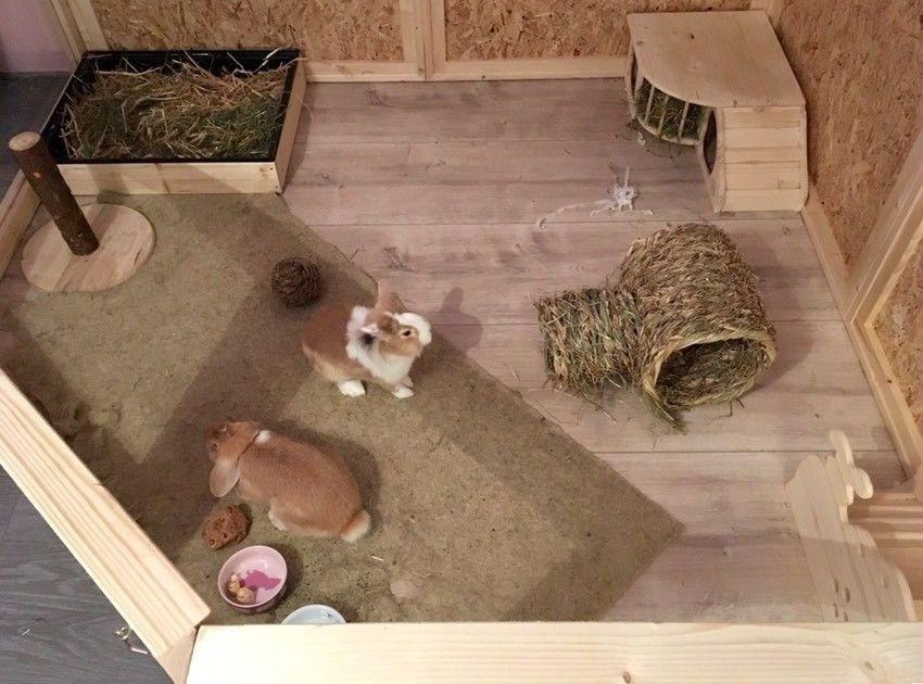 Pin Von Jojo Auf Haschen In 2020 Kaninchengehege Kaninchen Niedliche Tierbabys