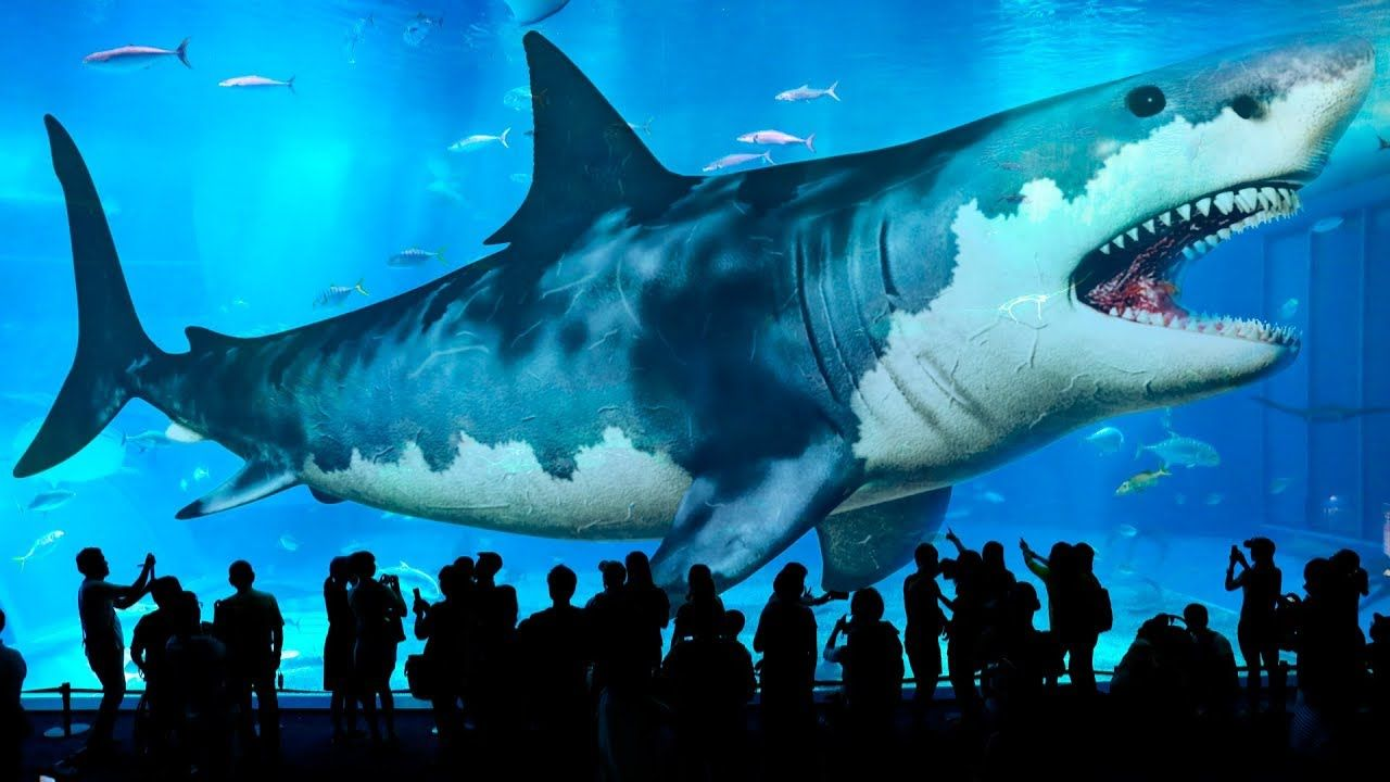 10 Biggest Sharks Ever Existed On Earth Youtube Big