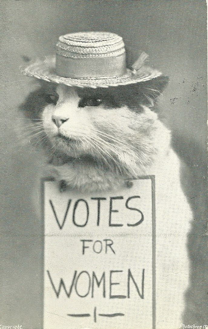 We Demand The Vote Suffrage Votes For Women Print 1910s Cat