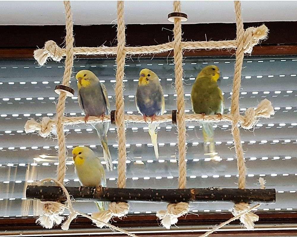Kanarienvogel Spielzeug