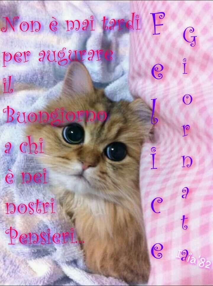 Buongiorno felice giornata dediche cuccioli gatti for Buongiorno con gattini