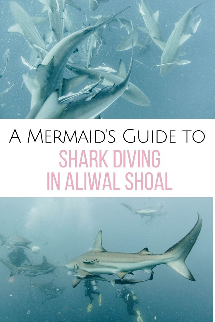 A Complete Guide to Diving in Aliwal Shoal, South Africa. #freereadingincsites