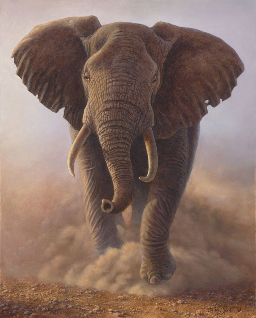 Charging bull african elephant african elephant and tattoo