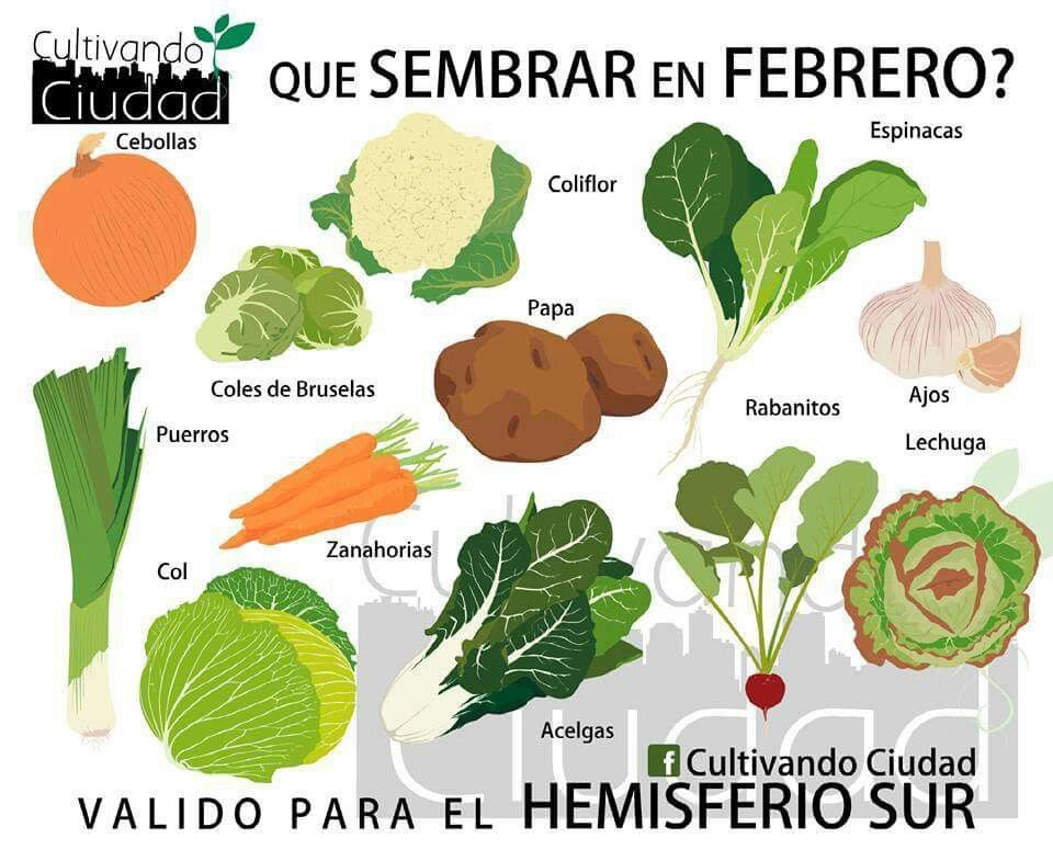 Febrero | Plantar | Pinterest | Huerta, Huerto y Verduras