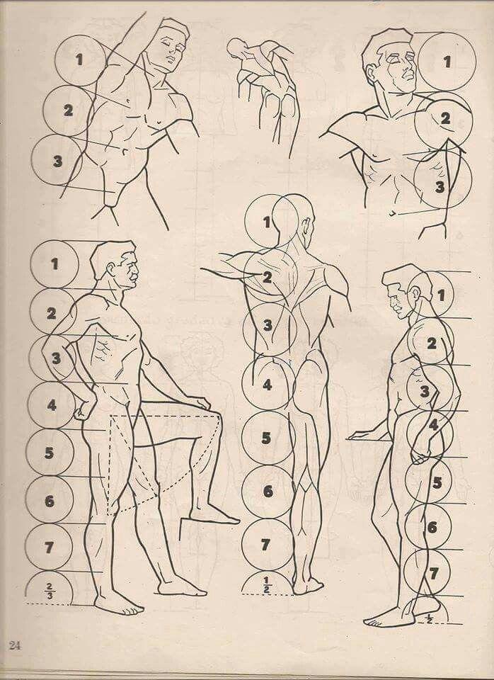 Pin de Neela jee en Anatomy | Pinterest | Anatomía, Dibujo y Dibujo ...