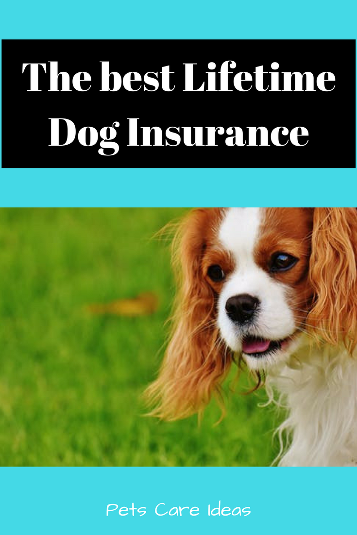 The Best Lifetime Dog Insurance Pet Insurance Reviews Dog Insurance Pet Health Care