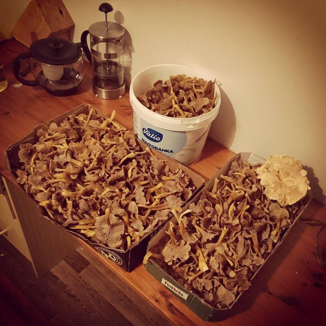 Se on #taiteilijaelämää parhaimmillaan kun hakea säveltäjäkumppanilta sopivan keon #sieniä! Lempisieneni on #suppilovahvero!