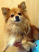 Afv Adopt A Dog Dog Adoption Dogs Pets