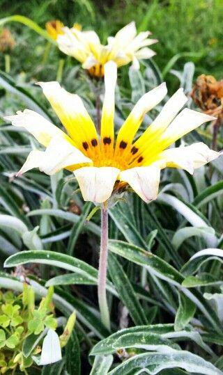 Flor de la ECI.