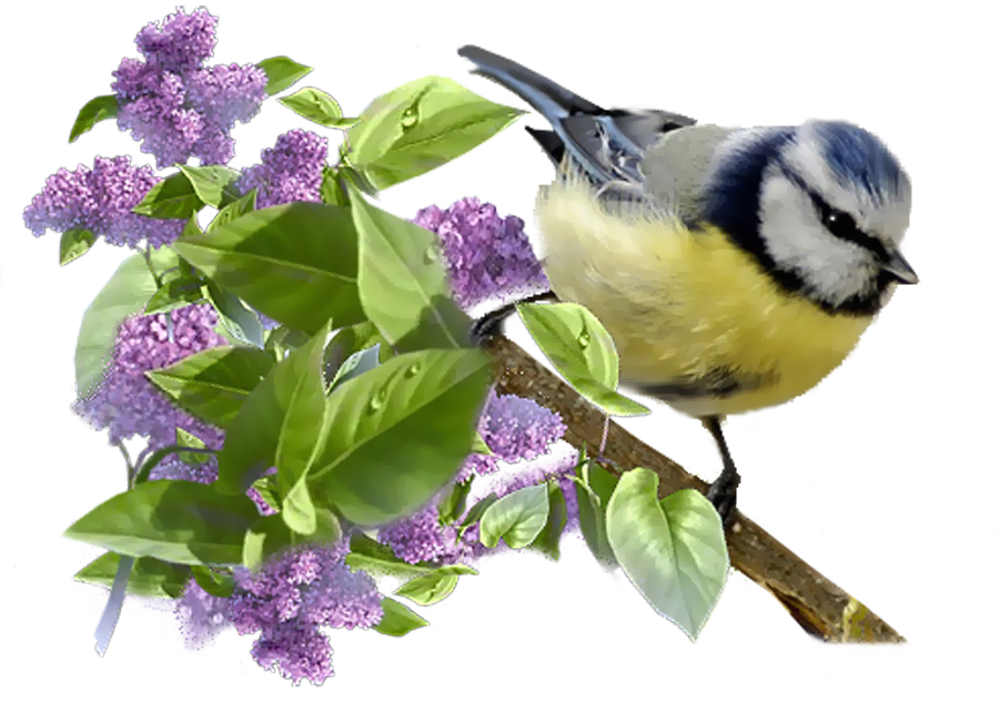 Aves Png Beautiful Birds Spring Birds Birds