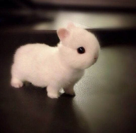 Funny Bunny Baby Fluffy White Little Cute Baby Animals Cute