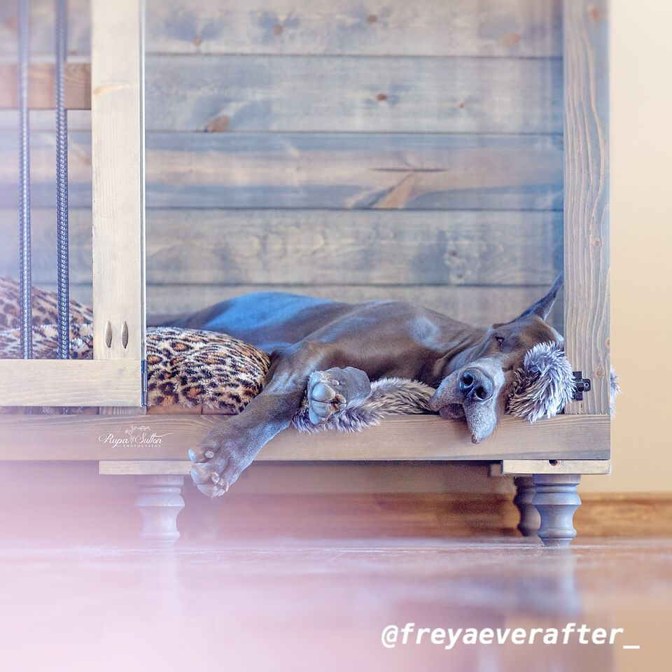 Love This One From Our Friend Freyaeverafter Look How Cozy He